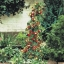 สตรอเบอรี่เลื้อย Climbing Strawberry /30 เมล็ด thumbnail 2