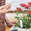 Xiaomi Flower Monitor Tool - เครื่องมือช่วยดูแลต้นไม้ thumbnail 4