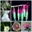 ดอกไม้หายาก (คละชนิด) Rare Flower Mix / 20 เมล็ด thumbnail 1
