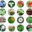 Xiaomi Flower Monitor Tool - เครื่องมือช่วยดูแลต้นไม้ thumbnail 14