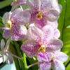 loveorchid