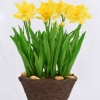 D00051 ดอกไม้ประดิษฐ์ Starflorist