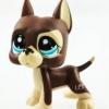 สุนัขเกรดเดน สีน้ำตาล ตาสีฟ้า #1519